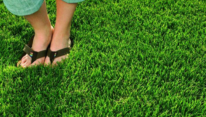 Купить газонную траву по лучшей цене